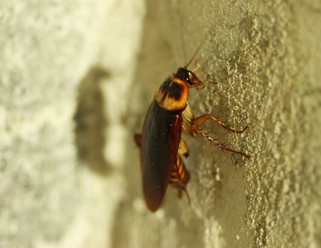 What Should You Do If You See A Cockroach In Your Home